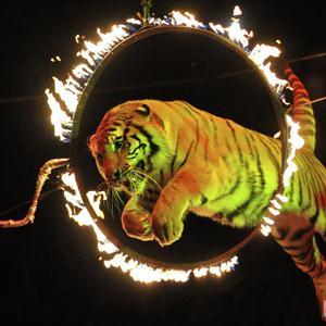 Цирки Тосно