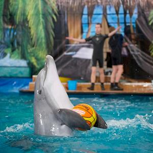 Дельфинарии, океанариумы Тосно