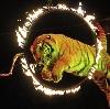 Цирки в Тосно