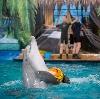 Дельфинарии, океанариумы в Тосно