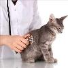 Ветеринарные клиники в Тосно